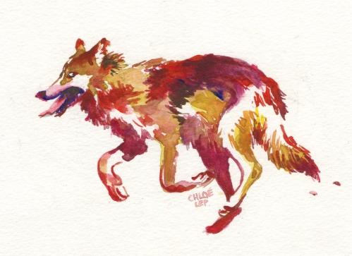 running-wolf